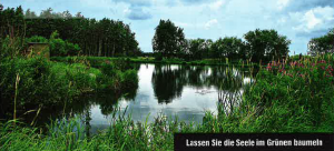 Teich im Grünen
