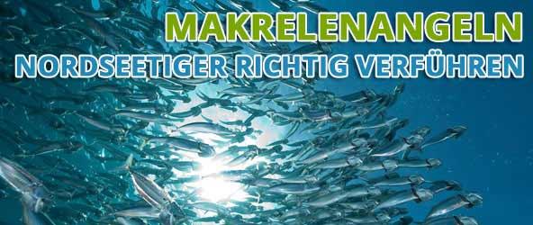 Makrelenangeln – Nordseetiger richtig verführen